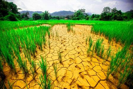 الزراعة في المغرب تقاوم التقلبات المناخية!