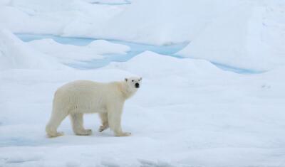 خسارة كارثية تتربص بالقطب الشمالي في أيلول