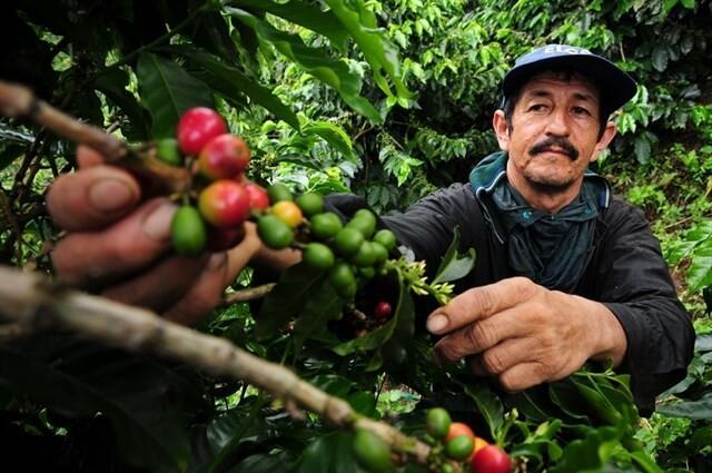 Los principales productores de café alrededor del mundo son: México, India, Etiopía, Colombia, Indonesia, Vietnam y Brasil.