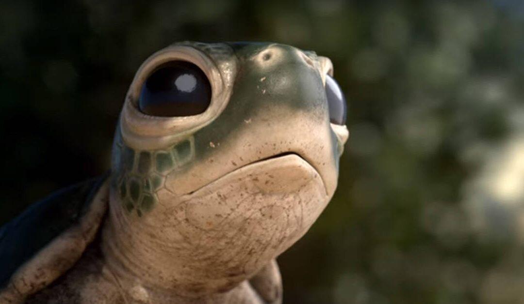 Una tortuga,  y una gaviota…no mas plásticos .