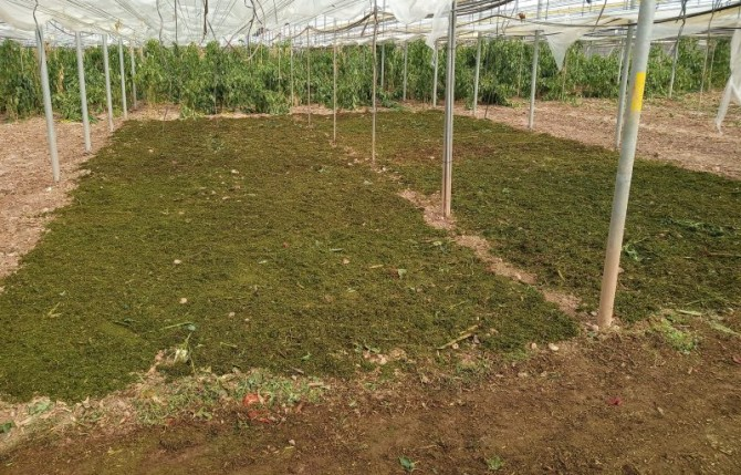 Asocian la diversidad de hongos del suelo con la fertilidad y el mejor desarrollo de los cultivos intensivos