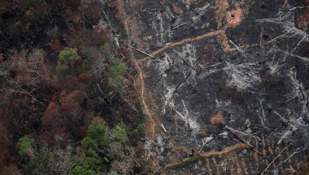 إتش.آند.إم توقف شراء الجلود من البرازيل بسبب حرائق غابات الأمازون