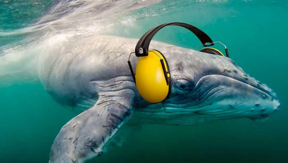 La contaminación acústica del mar, mucho ruido bajo el agua!!