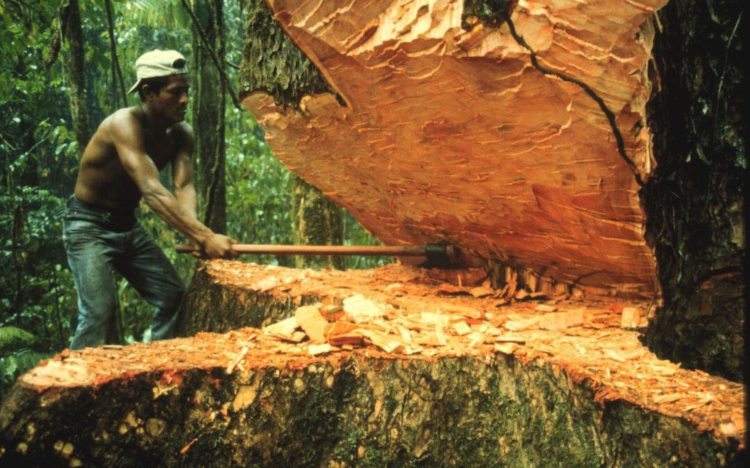 El  impacto real de la deforestación en la Amazonia!!