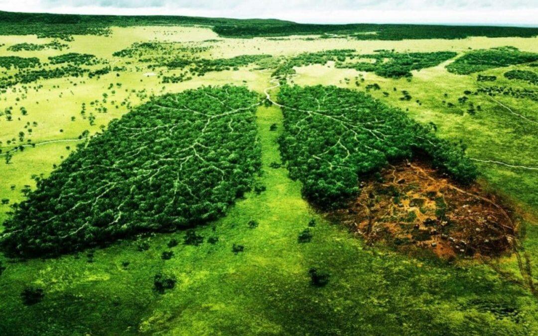 ¿Como adaptan los árboles al cambio climático?