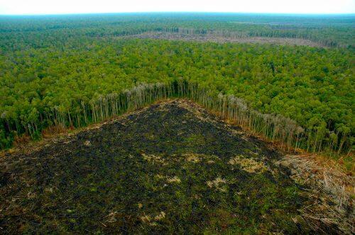 selva-quemada