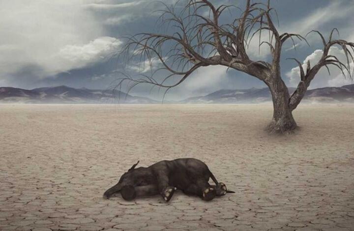 لماذا لا يشعر الإنسان بانقراض الحيوانات؟