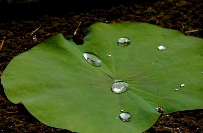 Un proyecto europeo busca imitar las propiedades de plantas para proteger superficies de mármol