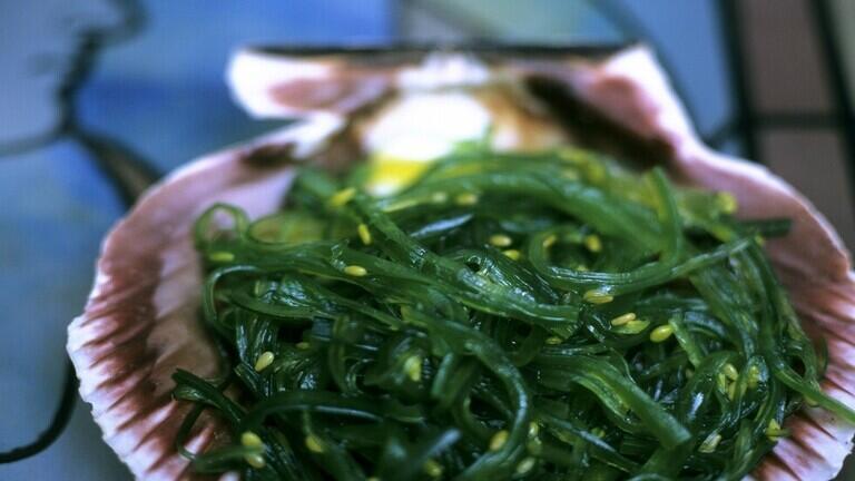 الأعشاب البحرية تحمي من أمراض القلب الخطيرة