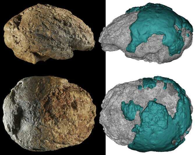 Un estudio da a conocer el molde natural del cerebro neandertal de Gánovce