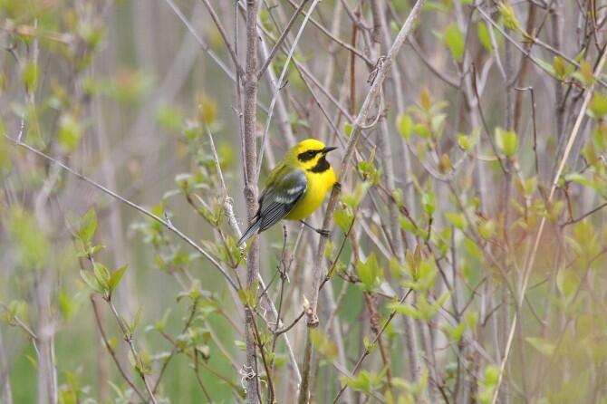 Conservan, una región en el Golfo de Méxic,  para las aves migratorias!!!