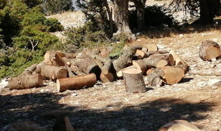 جريصاتي تابع قضية قطع اشجار الشوح في خراج القبيات والمدعي العام البيئي أمر بفتح تحقيق