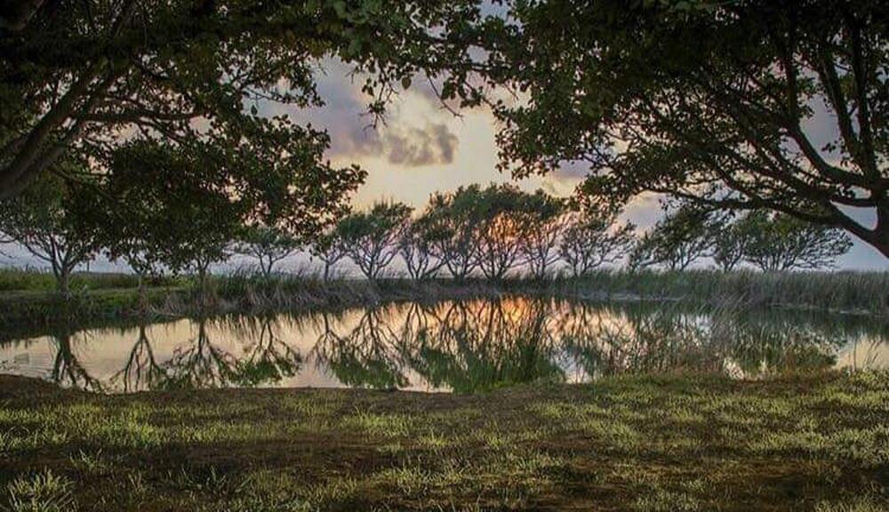 محمية صور تنتهك بالصيد البري… ولا إجراءات رادعة!
