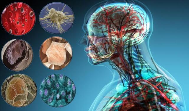 يتم استبدال خلايا الجسم كل 7 سنوات بخلايا جديدة وهذا ما يفسر علميا سبب تغير نظرة الانسان للحياة  ويصبح أكثر ادراكا وتزداد الصفات الجديدة