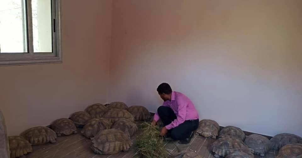 إحباط تهريب 40 سلحفاة بالحدود المصرية