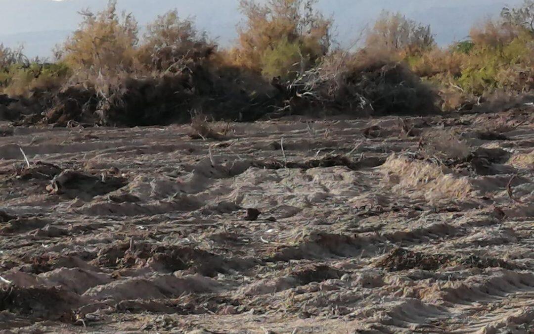 """""""محمية فيفا"""" الأردنية في خطر .. جرف نباتات وأشجار مهددة بالإنقراض"""