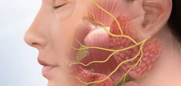 العصب السابع الذي يتحكم في العضلات على جانبي الوجه، والتي تتحكم بتعبيرات الوجه مثل الأبتسام، الضحك، البكاء وغيرها، لذلك أي إصابة به تؤثر على تعبيرات الوجه الحركية، وقد تؤدي الى شلل الوجه النصفي
