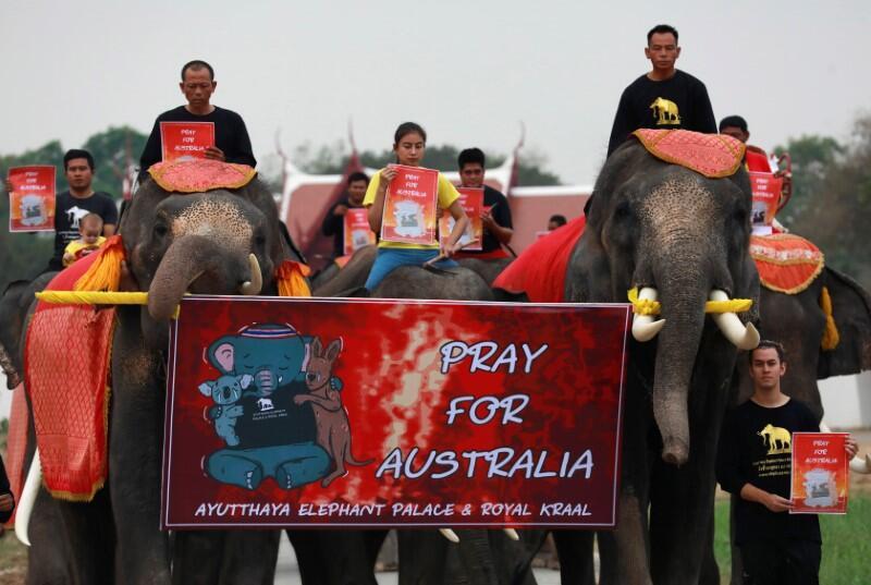 فيلة تايلاندية تشارك في مسيرة من أجل ضحايا حرائق أستراليا من الحيوانات