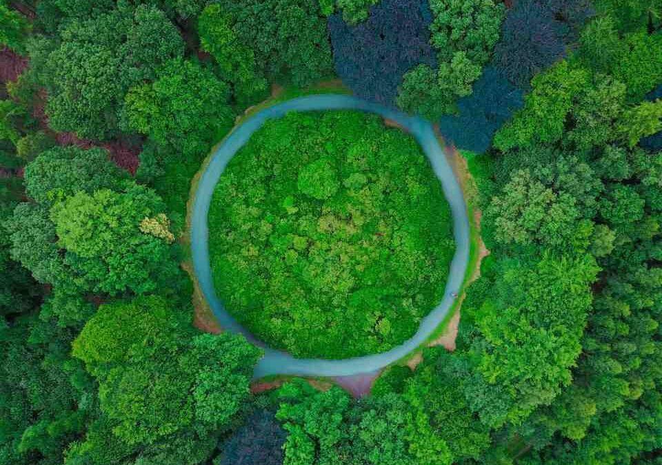نيوزيلندا ترغب في زراعة مليار شجرة لمكافحة تغير المناخ!