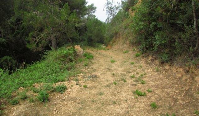 ناشطون بيئيون حذروا من انشاء محطة محروقات في غابة خندق الرهبان بعبدا