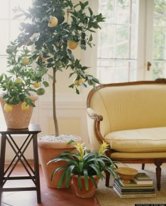 o-LEMON-TREE-LIVING-ROOM-900-62
