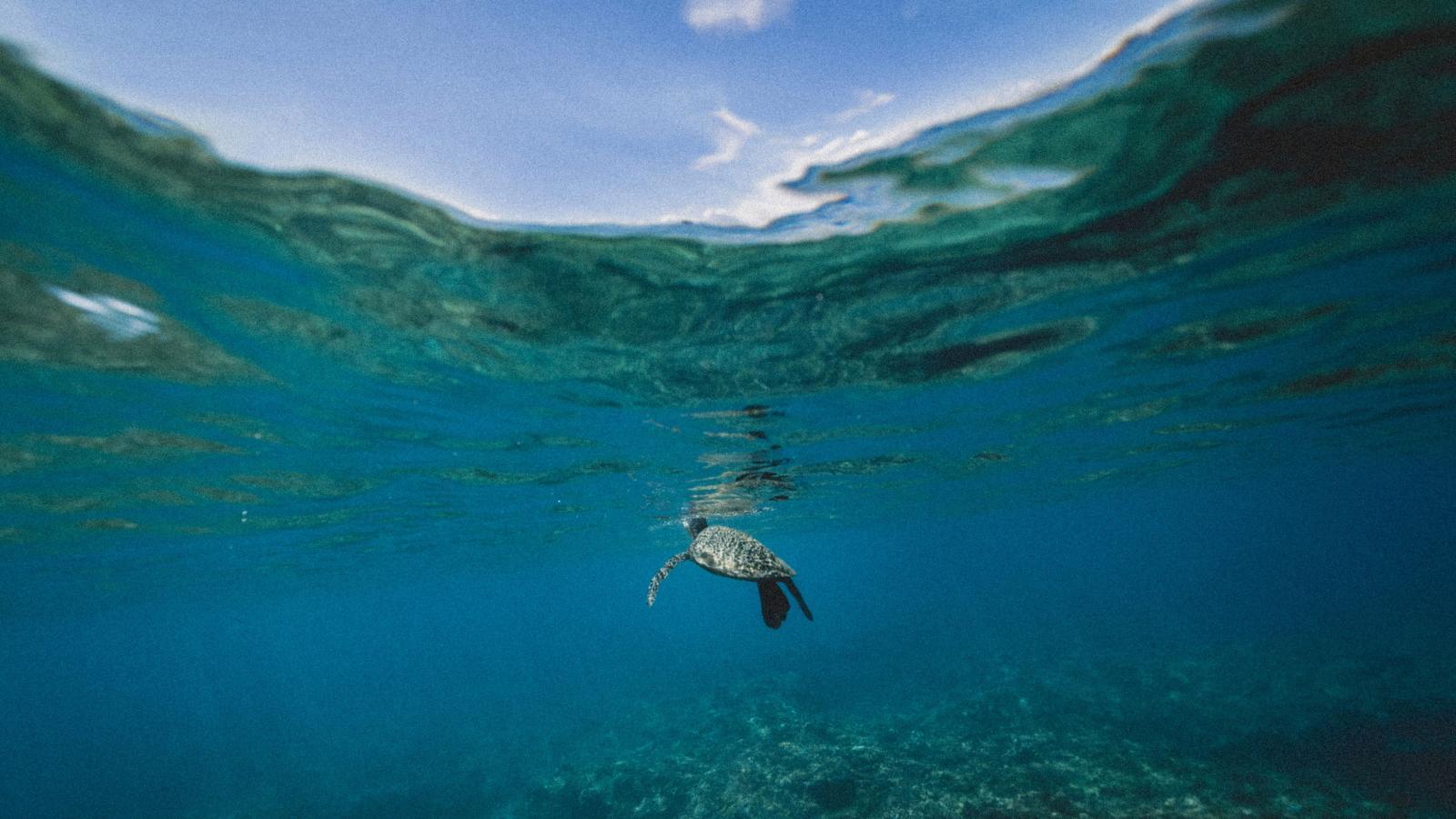 حرارة المحيطات ترتفع في اتجاه يدمّر الحياة البحرية! !