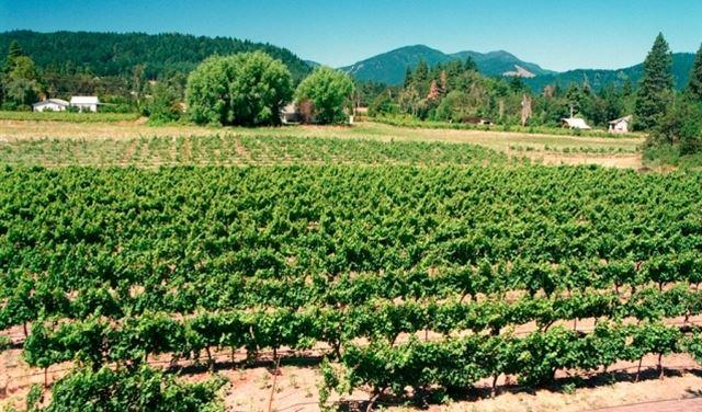 اطلاق مشروع ارضك هي رسمالك في شكا بهدف التشجيع على الزراعة