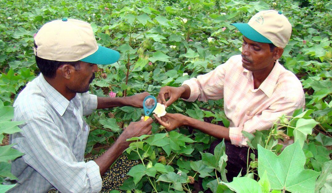 2020 .. سنة دولية لصحة النبات