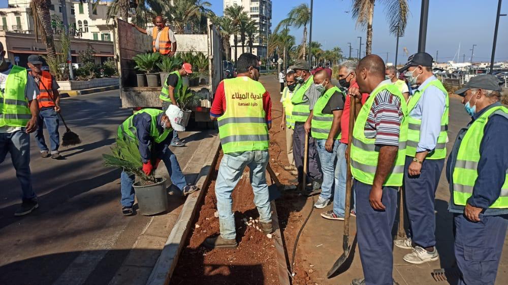حملة تنظيف في الميناء وزراعة شتول وأشجار على طول كورنيش البحر