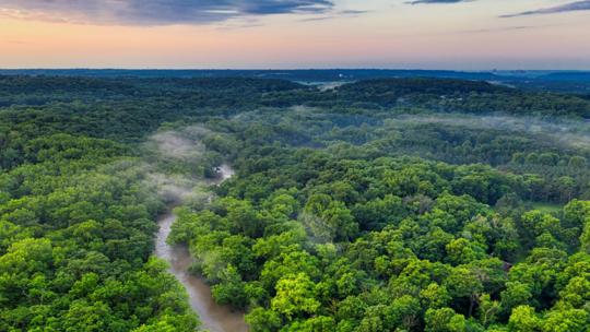 ماذا سيحدث إذا دُمّرت غابات الأمازون؟
