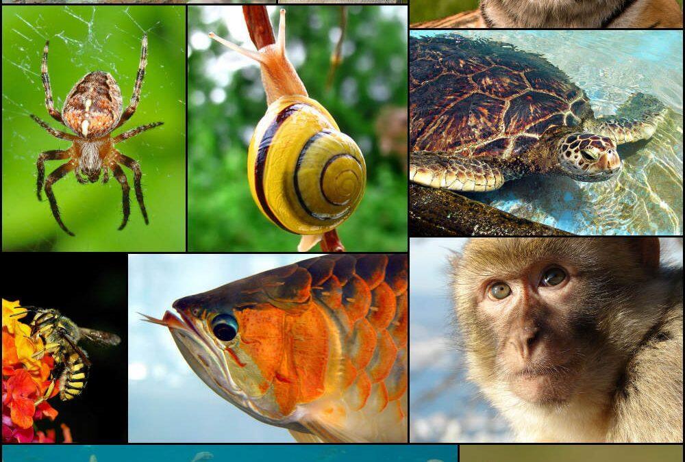 إكتشافات بيئيّة في العام 2020… وللبنان حصّة منها