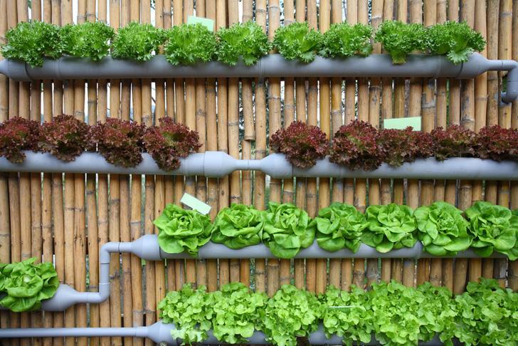 استثمار سعودي في أول شركة لتطوير الزراعة الذكية داخل المنازل