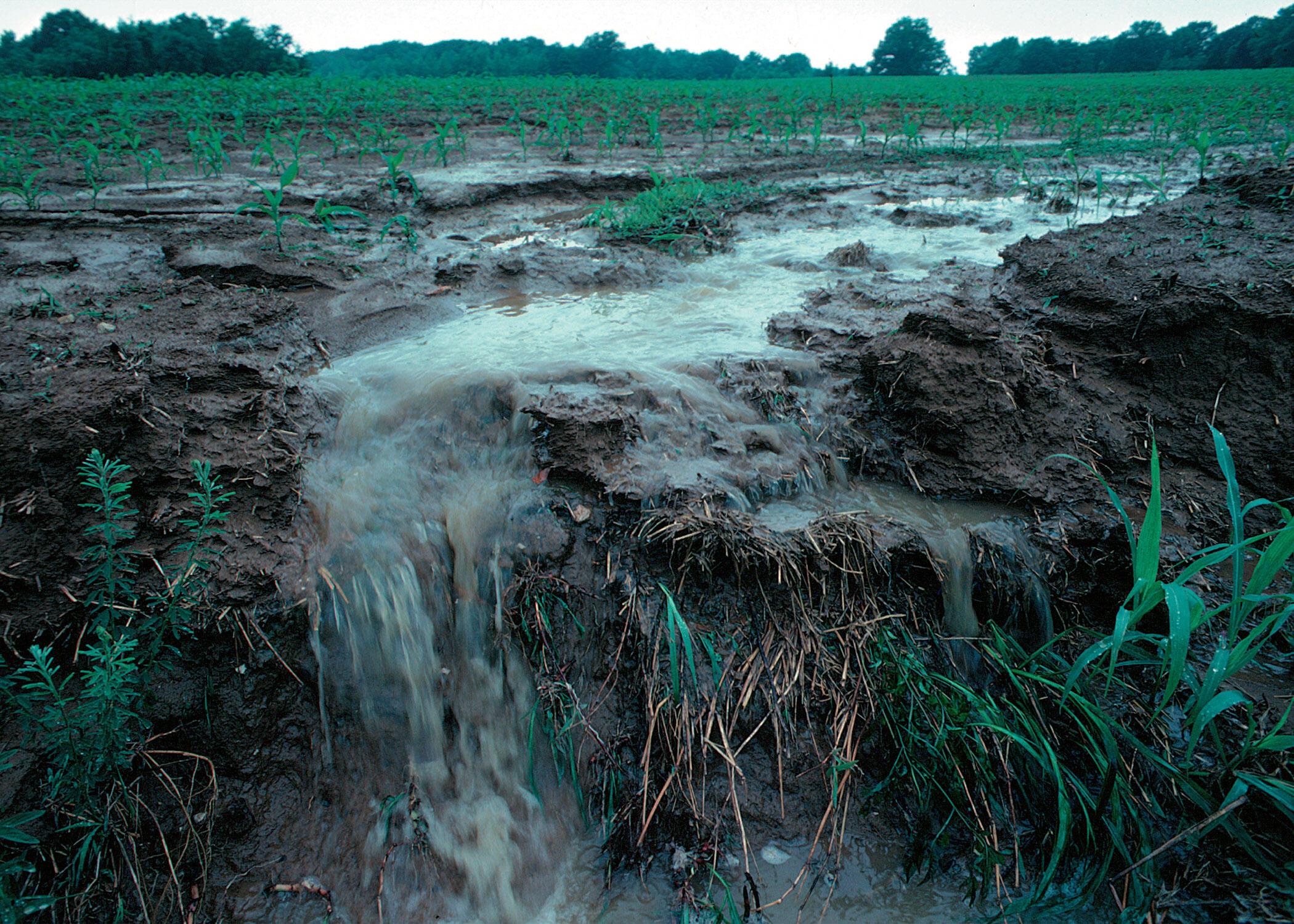 التلوث النيتروجيني خطر عالمي يجب تخفيضه إلى النصف