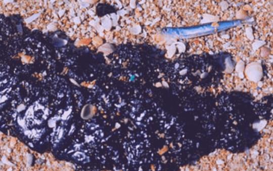 تسرّب نفطي في فلسطين المحتلّة .. كارثة بيئية لشواطىء المتوسّط!