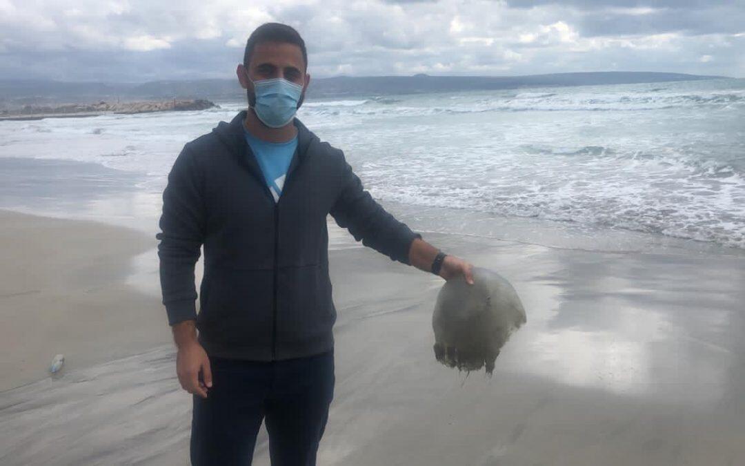 ظاهرة قناديل البحر على شاطئ صور