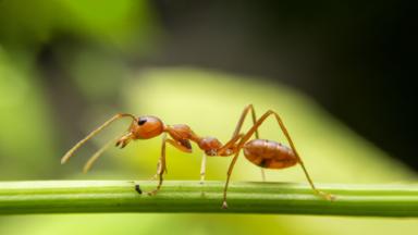 سر كون لدغات النمل قوية جدا ومؤلمة!