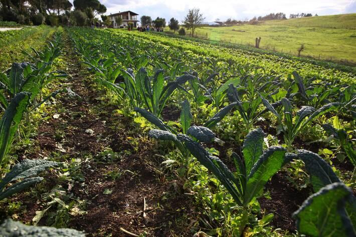أدوات عملية للتشجيع على تخزين الكربون العضوي في التربة