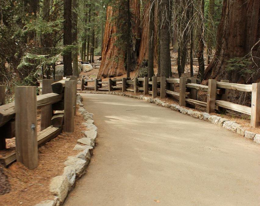 «تغليف» أكبر شجرة في العالم لحمايتها من حريق في كاليفورنيا