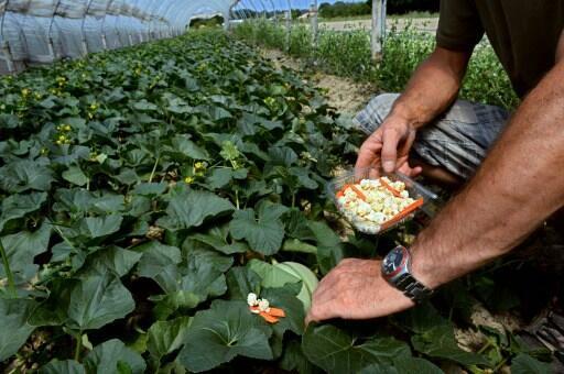 Agricultura: en la Drôme, un bio-distrito único en Francia