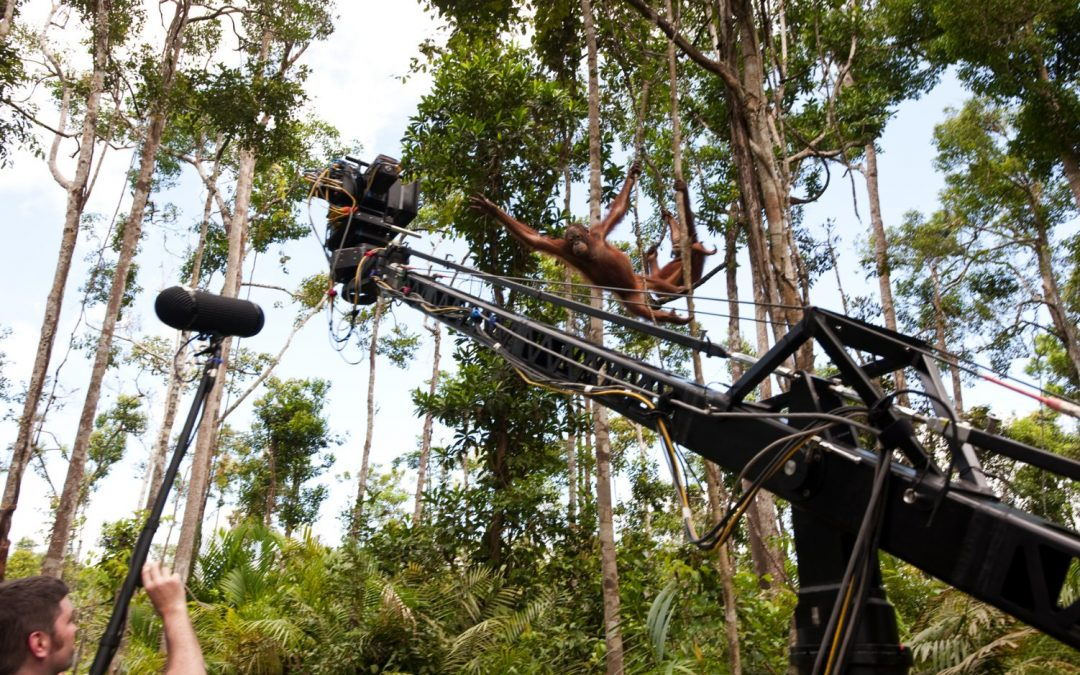 Dans la Journée mondiale de l'environnement… un film digne d'être vu