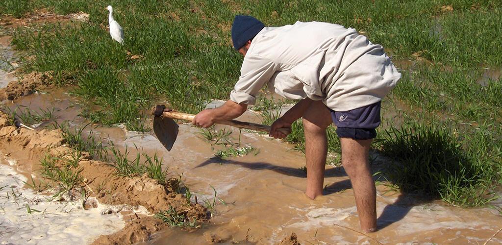 مصر تلجأ إلى تحلية مياه البحر