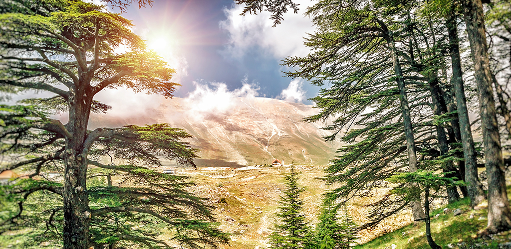 حكومة لبنان وحقوقنا في حماية البيئة والصحة العامة