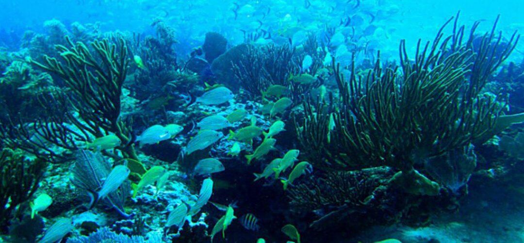 """المخاطر الصحية لتلوث الأوساط المائية بالطحالب ونمو الـ""""سيانوبكتيريا"""" Cyanobacteria"""