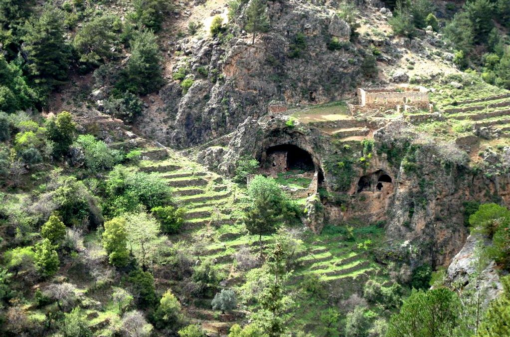 لبنان ليس في منأى عن تغير المناخ… وادي قايشا وأرز الرب مهددان!