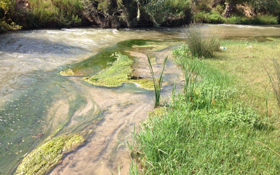 توكسينات الطحالب ومخاطر الإصابة بالألزهايمر