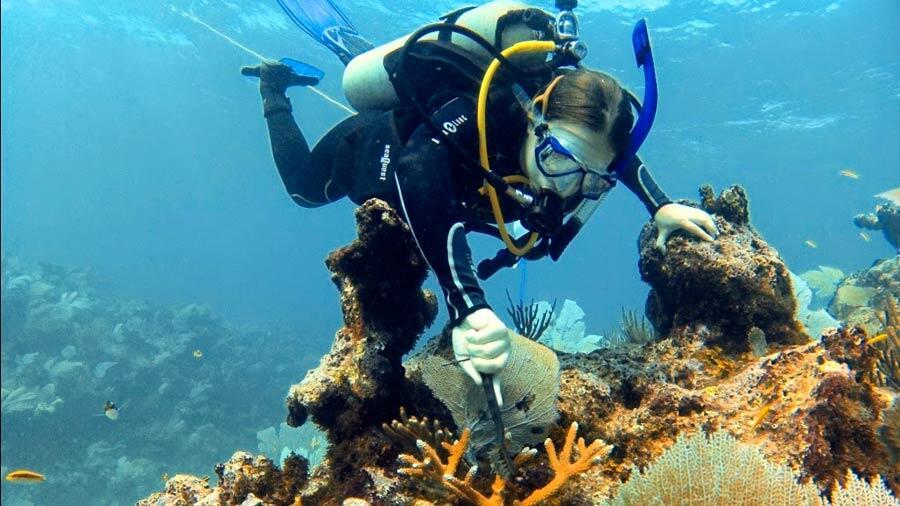 Un biologiste mexicain crée une méthodologie pour restaurer les récifs coralliens
