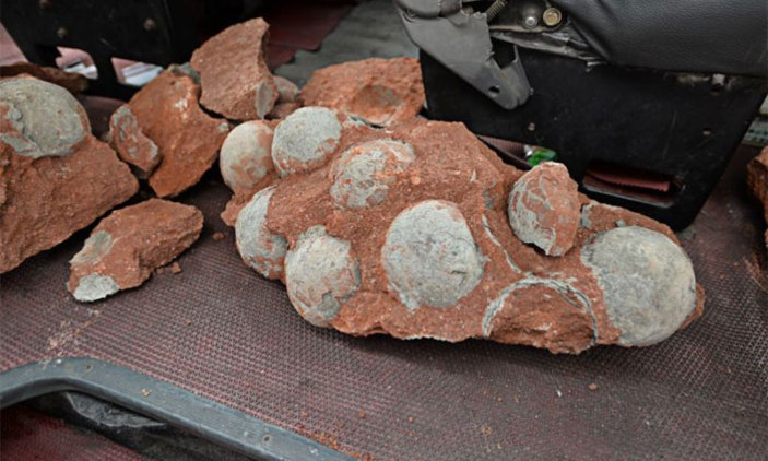'Some dino eggs took months to hatch, perhaps leading to extinction'