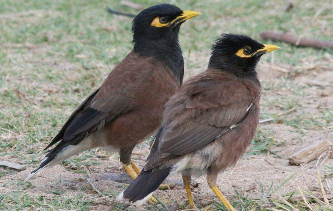 طيور غازية في حاصبيا… الخبير جرادي لـ Green Area: خطيرة تهدّد باقي الأنواع