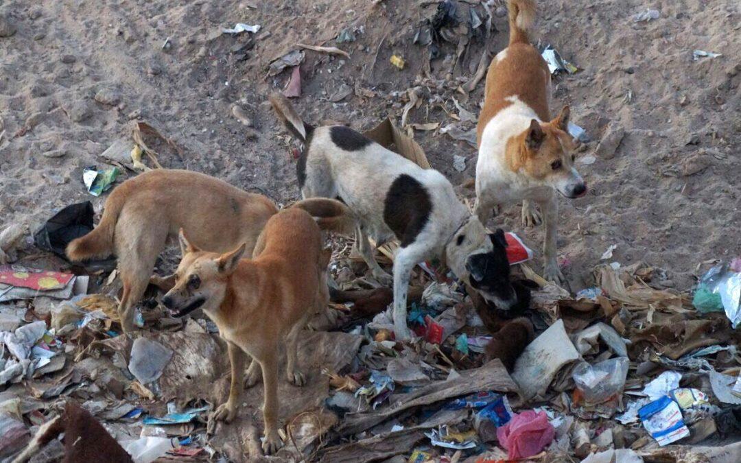 كلاب مسعورة في قضاء حاصبيا… اليونسيف تتولى جمعها وتسليمها لجمعية في الناقورة ومعالجتها
