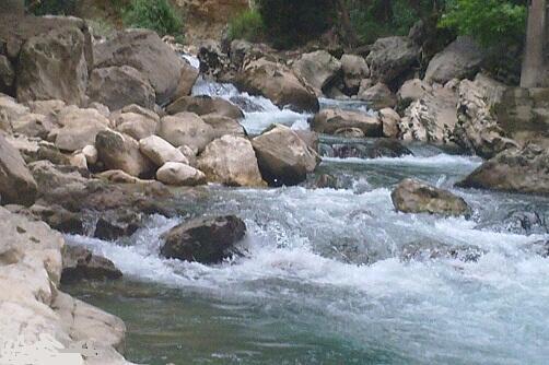 دراسة: واقع الثروة السمكية في الأنهار اللبنانيّة وحوض الحاصباني